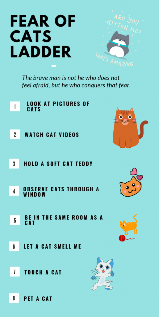 fear of cats ladder