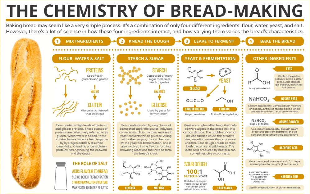 bread infographic