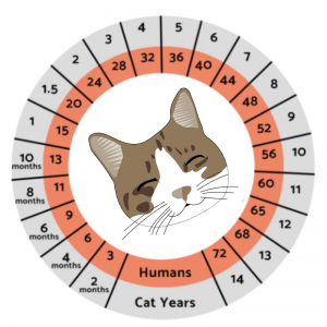 human to cat years chart