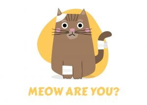 funny cat jokes