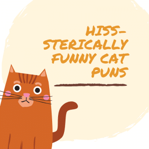 Cat Puns and Jokes