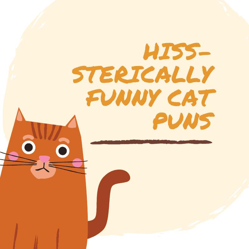 Cat Puns and Jokes