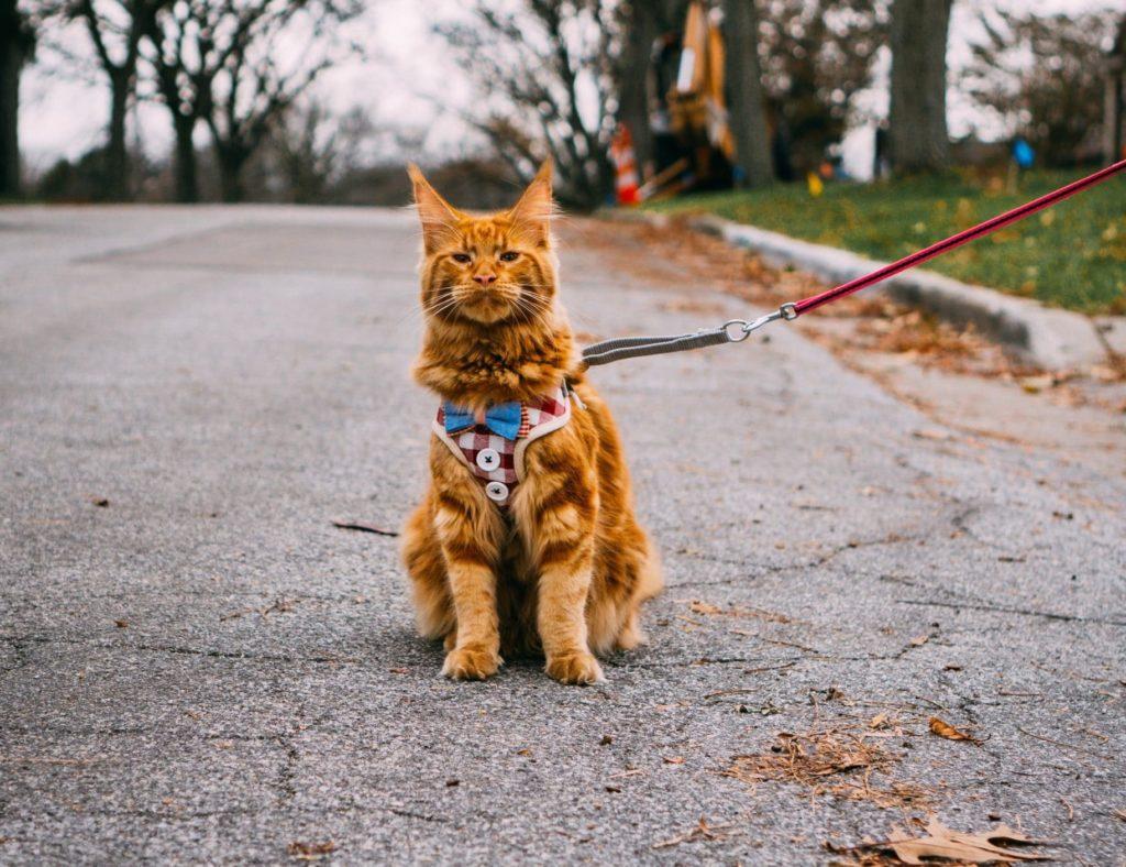 vest cat harness