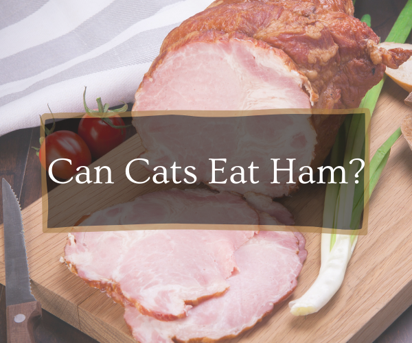can cats eat ham