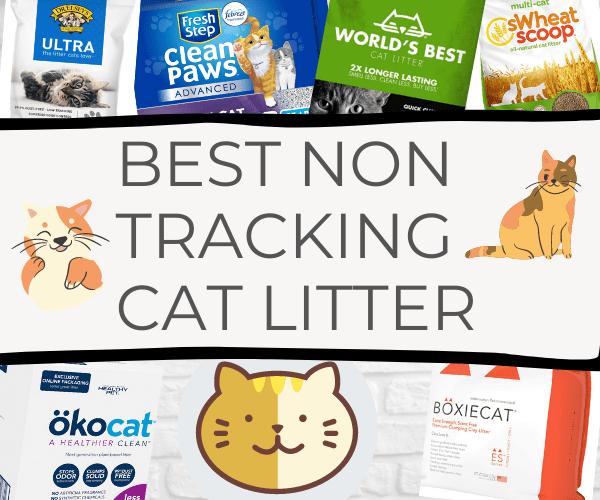 non tracking cat litter