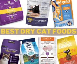 best dry cat foods