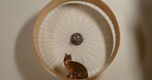diy cat wheel