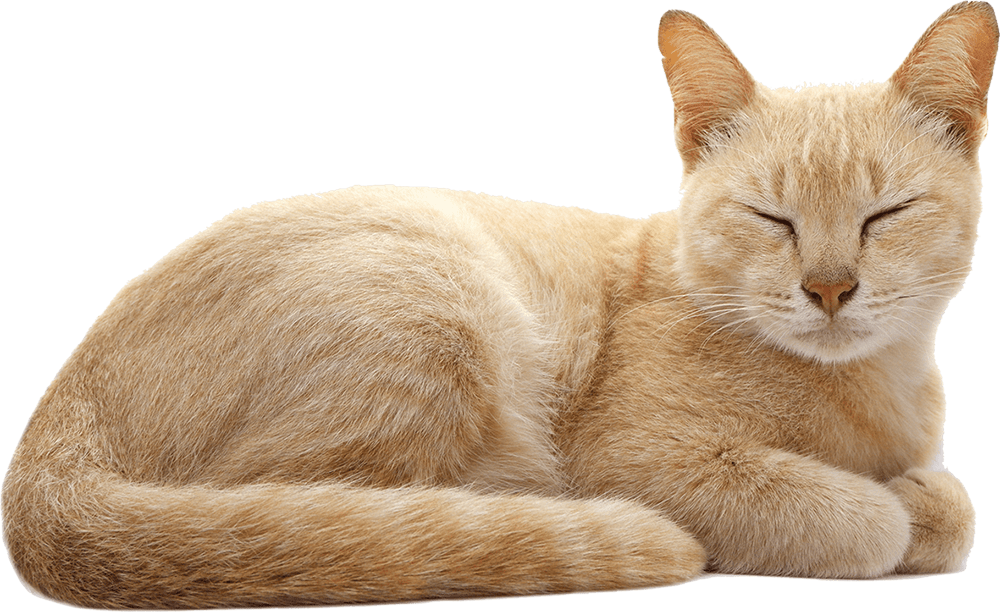 <a href='https://pngtree.com/so/Cat'>Cat png from pngtree.com/</a>